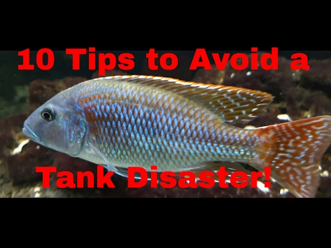 10 Tips To Avoid A Tank Disaster
