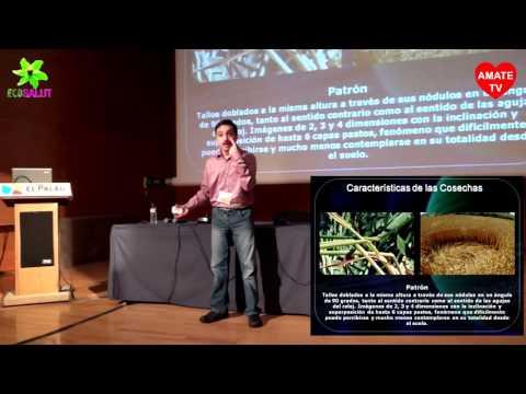 Denis Astelar - El Enigma de los Crop Circles, círculos de las cosechas - Ecosalut 22/11/14 AmateTv