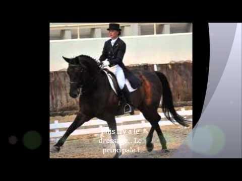 L'équitation pas un sport ? Bien + qu'un sport une vie