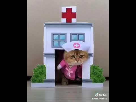 VIDEO LUCU Kucing Bermain TIK TOK