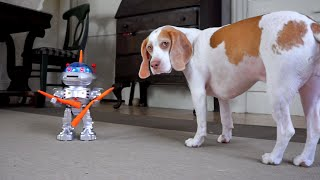 Dog vs. CarrotWielding Robot: Funny Dog Maymo