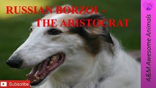 Russian Borzoi  The Aristocrat