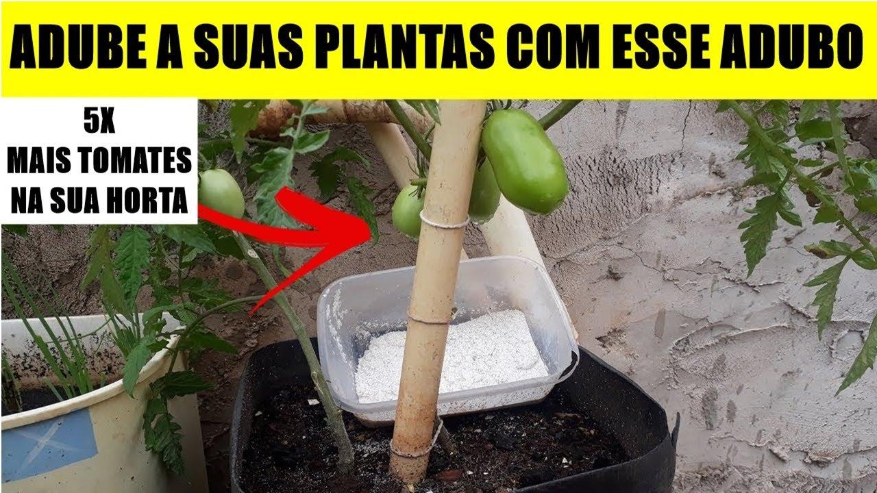 ADUBO DE CASCAS DE OVOS: Como Fazer Adubo em pó com Casca de OVOS