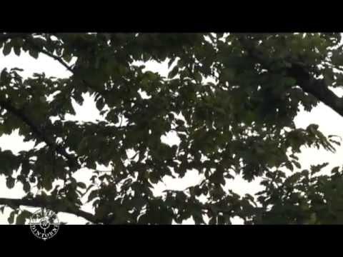Chiarini caccia ai tordi - 1^ parte.mpg