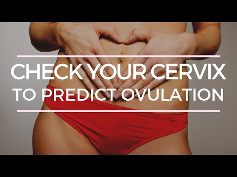HOW TO CHECK YOUR CERVIX TO PREDICT OVUALTION
