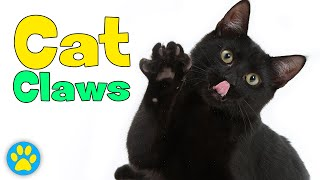 How To Cut Cat Claws
