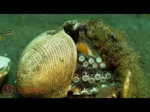 Indonesia, Underwater Planet Series HD