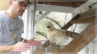 The Chicken Roost - Building Chicken Coop from Dog Kennel