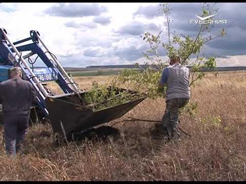 Инвентаризацию неиспользуемых сельхозугодий планируют провести в Самарской области