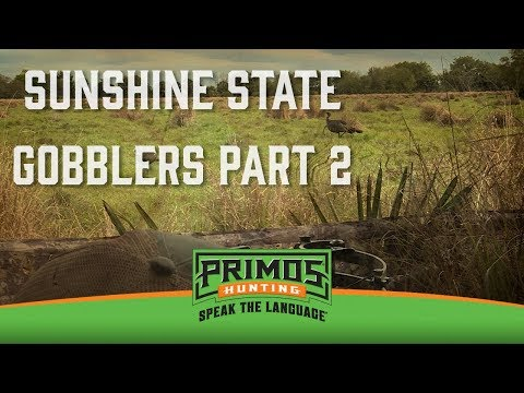 Sunshine State Gobblers Part II