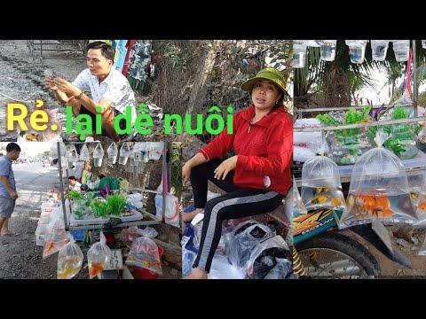 Gặp Chị gái đi xe máy bán nhiều loại cá cảnh rẻ.Lại dễ nuôi