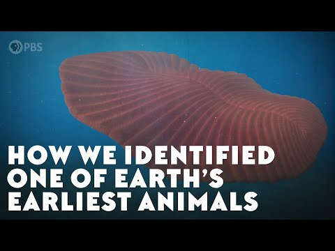 How We Identified One of Earth's Earliest Animals