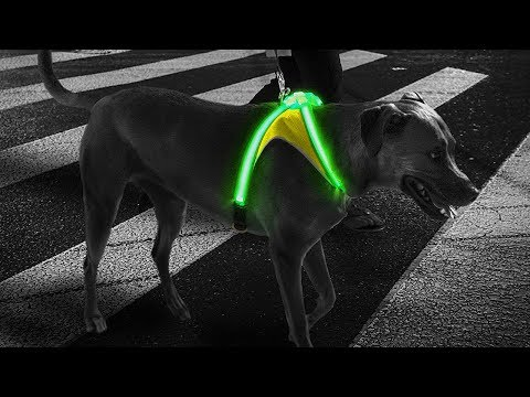 noxgear-lighthound-revolutionary-illuminated-and-reflective-harness-for-dogs