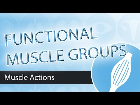 Muscle ActionsFunctional Groups