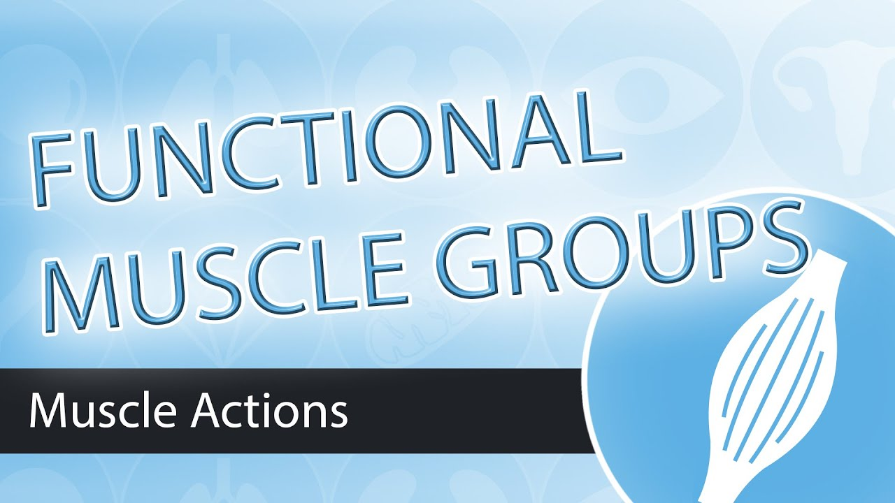 Muscle Actions Functional Groups Youtube