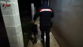 "Operazione ""Abracadabra"" dei Carabinieri di Altamura"