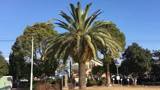 ウェザーリポート動画0124(09:25)@宮崎県日向市「青空の公園」 thumbnail