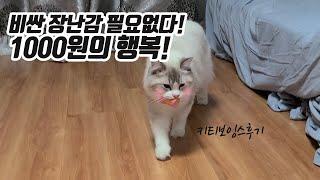 비싼 장난감 필요없다!! 가성비 갑 1000원의 행복(…