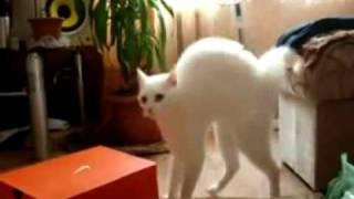 Кошка ушла!