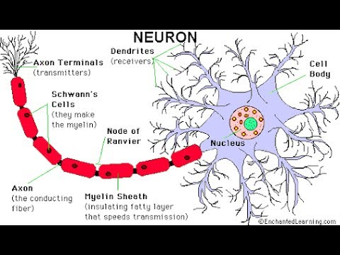 Various types of ion channels, mechanism of generation of nerve impulse