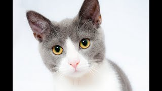 Лечение котенка от лишая