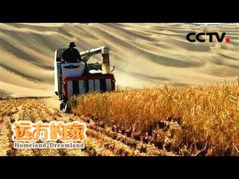 《走遍中国》沙漠变良田  20180614 | CCTV中文国际