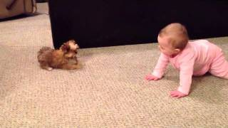 Baby Dog Whisperer! Cesar Millan Has Nothing On Her!! Shorkie Puppy Talks To Baby