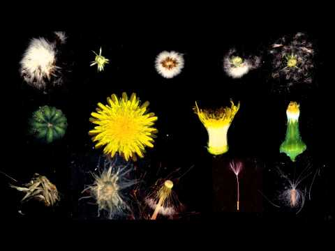 Dandelion Free Culture (2011) - Video Contact Sheet