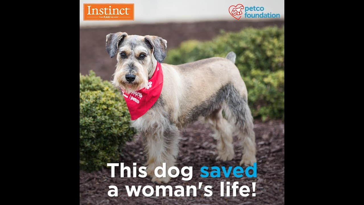 Family Has Adopted Many Pets, but Only One Hero - Petco