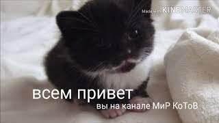 Красивые фото с котами