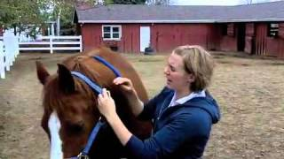 How to catch and lead a horse