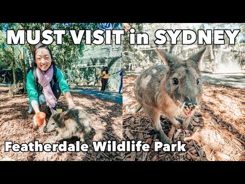 Feeding Wallabies & Kangaroos - Must Visit In Sydney - Featherdale Wildlife Park