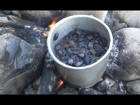 Cooking stink bugs (TARI) and fishing in Himalayan river.
