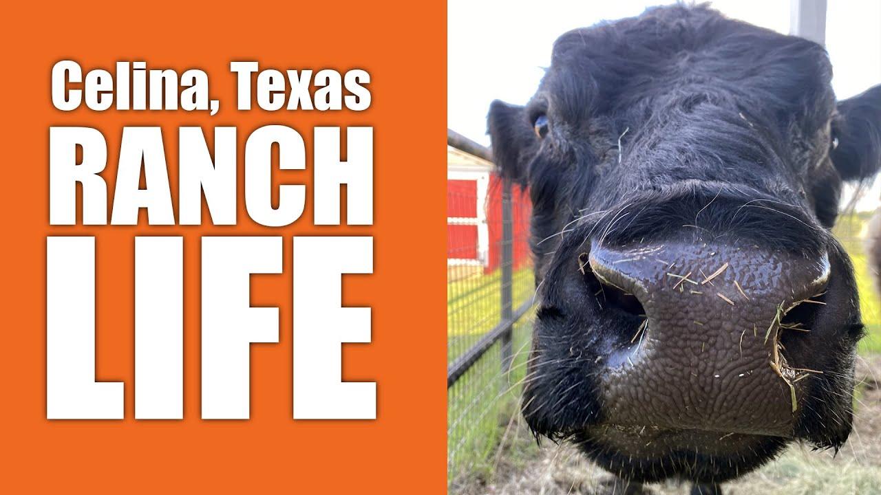 Celina Texas Real Estate Ranch Life 2