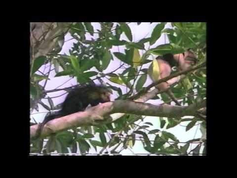 Amazing Animals: Rainforest Animals (Part 1 of 2)