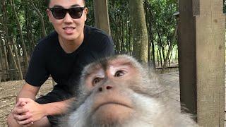 【峇里島】猴子會拿手機自拍?!烏布一日遊!烏布皇宮、猴子森林、黃昏步道!