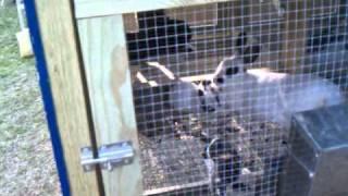 Building Rabbit+chicken Cage. Part 6