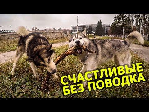 Купить щенка ? Купить собаку ? КОНЕЧНО! А лучше двух =) / To buy a puppy? To buy a dog? Of COURSE!