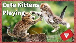 Cute Kittens Play Fighting [2017] (TOP 10 VIDEOS)