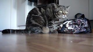 Кот и рюкзак; Cat and backpack