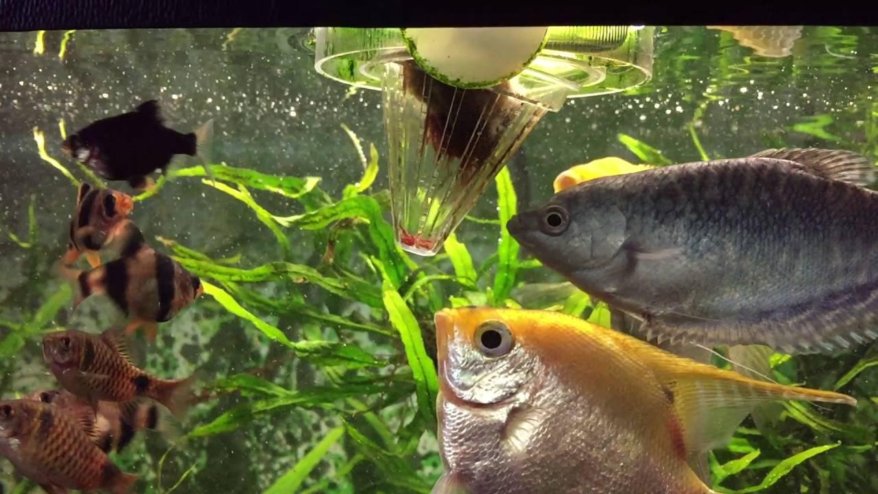 фотообои картинка кормить рыбок в аквариуме кунцнево белорусскому