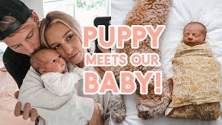 FIRST 48 HOURS!! Body After Birth + Bringing Our Newborn Home | Baby & Puppy Meet!