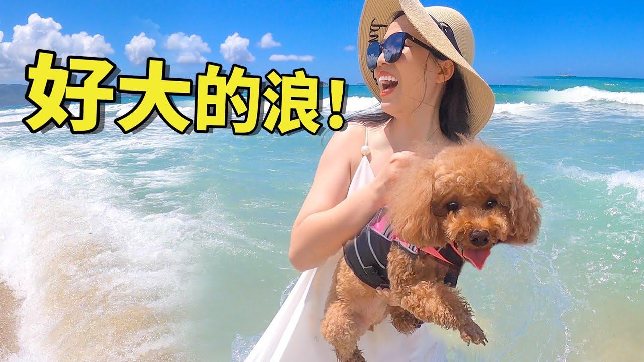 帶狗去旅行|狗狗穿救生衣下海差點被浪沖走,幸好女主人抓得快!【萌星人火龙果】|带着狗狗去旅行|宠物旅行