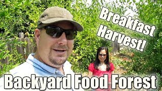 Harvesting Breakfast From The Backyard Food Forest | Breakfast Burrito Recipe