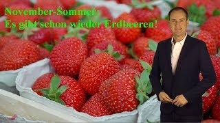 Irres Wetter sorgt für Erdbeer-Ernte im November: Neues Mega-Hoch steht bereit! (Mod.: Dominik Jung)
