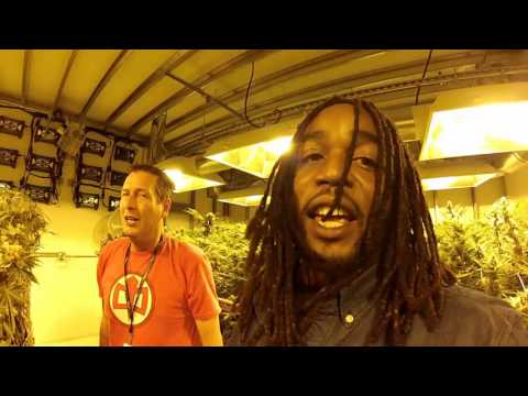 25 pounds of weed a day facility ,medicine man denver,gopro