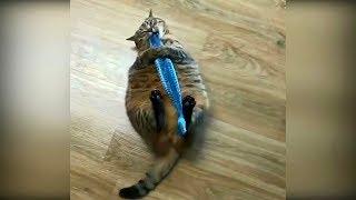 Приколы с животными 2019 #26 Смотреть видео про кошек 2019, смешные приколы с кошками до слёз 2019