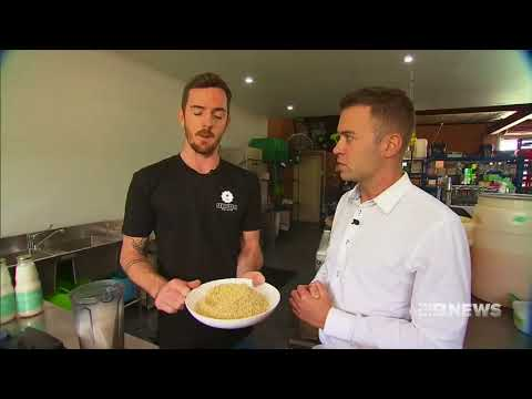 Hemp Milk | 9 News Perth