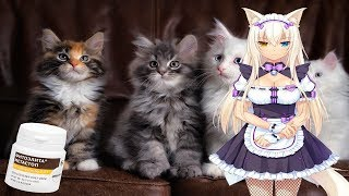 Как ветеринары разводят на бабки. Опухоль молочной железы у кошки, что делать?