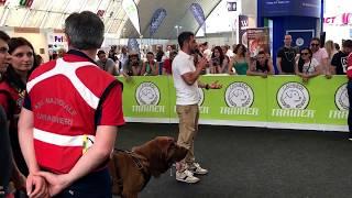 QuattroZampeinFiera Milano: Roberto Gasbarri di Trainer spiega la ricerca dei cani in su